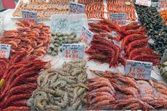 Verschiedene Arten von Garnelen für Verkauf lizenzfreies stockfoto