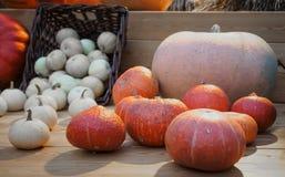 Verschiedene Arten von Kürbisen auf einem hölzernen Zähler Herbstkürbis auf einem Holztisch Kürbis für einen Feiertag lizenzfreies stockfoto