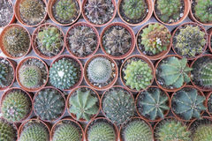 Verschiedene Arten von Kaktuspflanzen im Topf Lizenzfreie Stockfotos