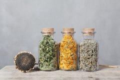 Verschiedene Arten von Kräutern für Tee innerhalb der Glasflaschen Stockfotos