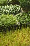 Verschiedene Arten von Mikrogrüns Lizenzfreie Stockfotografie