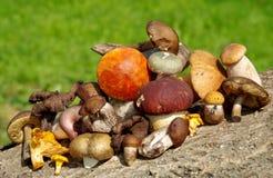 Verschiedene Arten von Pilzen Stockfotos