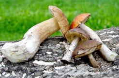 Verschiedene Arten von Pilzen Lizenzfreies Stockbild