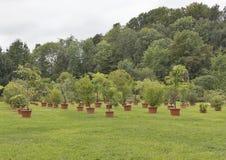 Verschiedene Bäume und Anlagen, die in den Töpfen im Freien wachsen Lizenzfreie Stockfotografie