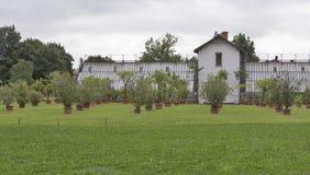 Verschiedene Bäume und Anlagen, die in den Töpfen im Freien wachsen Stockfotografie
