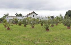 Verschiedene Bäume und Anlagen, die in den Töpfen im Freien wachsen Stockbild