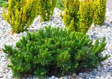 Verschiedene Büsche auf Blumenbeet Stockfotos