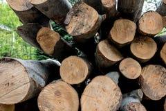 Verschiedene Baumstämme geschnitten auf einander Lizenzfreie Stockbilder