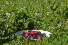 Verschiedene Beeren auf einer Platte Stockfotografie