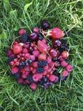 Verschiedene Beeren liegen auf dem Grasvitaminsommerhimbeererdbeerkirschkorinthenbonbon Stockbild