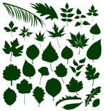 Verschiedene Blätter Stockfotos
