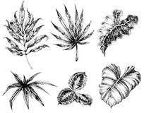 Verschiedene Blatthandzeichnung Stockfotos