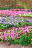 Verschiedene Blume auf dem Garten Scham Lizenzfreie Stockbilder