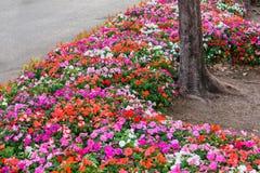 Verschiedene Blume auf dem Garten Scham Stockfotos