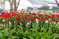 Verschiedene Blume auf dem Garten Scham Stockfotografie