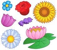 Verschiedene Blumen eingestellt Stockbilder