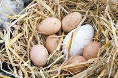 Verschiedene braune und weiße Eier Stockfotos