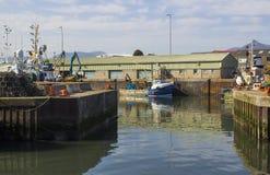 Verschiedene bunte Fischenschleppnetzfischer gebunden oben im ruhigen Wasser von Kilkeel-Hafen in der Grafschaft unten Nordirland stockbild