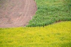 3 verschiedene Ernten archiviert, Mais, Reis Stockfotos