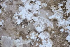 Verschiedene Farben der Flechte auf Steinhintergrund lizenzfreie stockbilder