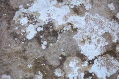 Verschiedene Farben der Flechte auf Steinhintergrund lizenzfreie stockfotografie