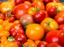 Verschiedene verschiedene Farborganische selbstgezogene Tomaten Rot, gelb, Stockfotos