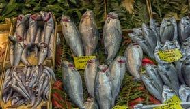 Verschiedene Fische auf den Gegenfischen kaufen in Istanbul Lizenzfreie Stockfotos