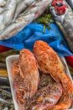 Verschiedene Fische auf den Gegenfischen kaufen in Istanbul Stockbild
