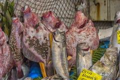 Verschiedene Fische auf den Gegenfischen kaufen in Istanbul Stockfoto