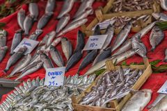 Verschiedene Fische auf den Gegenfischen kaufen in Istanbul Stockfotografie