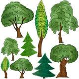 Verschiedene Formen von laubwechselnden und Koniferenbäumen Lizenzfreies Stockbild