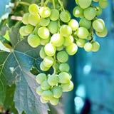 Verschiedene Früchte und Beeren, Äpfel, Pfirsiche, Pflaumen, Trauben, Erdbeeren, die im Garten wachsen Stockfoto