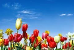 Verschiedene Frühlingsblumen in Richtung zum blauen Himmel Stockfotografie