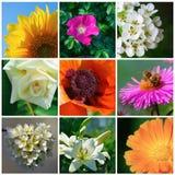Verschiedene Gartenblumen Lizenzfreie Stockbilder