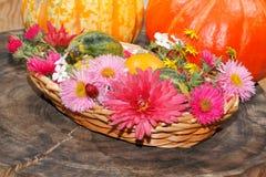 Verschiedene Gartenblumen der Blumen und dekorative Kürbisse in einem Korb Stockbild