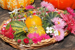 Verschiedene Gartenblumen der Blumen und dekorative Kürbisse in einem Korb Lizenzfreie Stockbilder