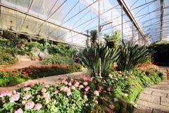 Verschiedene Gartenblumen, die im Gewächshaus blühen Lizenzfreies Stockfoto