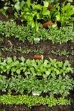 Verschiedene Gemüsesämlinge mit Beschriftungsschildern Lizenzfreie Stockbilder