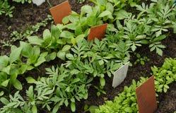 Verschiedene Gemüsesämlinge mit Beschriftungsschildern Stockfotos