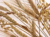 Verschiedene Getreidearten Stockbilder