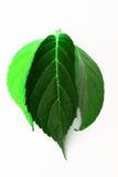 Verschiedene Grünblätter Stockbild