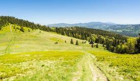 Verschiedene grüne Abstufungen Lichtung und Wald in den Bergen Stockbilder