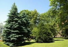 Verschiedene grüne tonalties im Park Stockbild