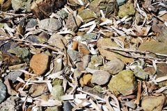 Verschiedene graue Steine, Holz, abstrakter Hintergrund Lizenzfreies Stockfoto