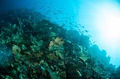 Verschiedene harte Korallenriffe in Gorontalo, Indonesien-Unterwasserfoto Stockfotos