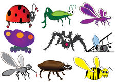 Verschiedene Insekte Lizenzfreies Stockbild