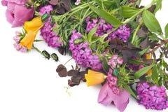 Verschiedene Juni-Blumen und ein Grün hört ab Lizenzfreies Stockbild