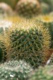 Verschiedene Kaktusanlagen Lizenzfreies Stockbild