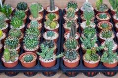 Verschiedene Kaktuspflanzen Lizenzfreie Stockfotografie