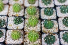 Verschiedene Kaktuspflanzen/Gruppe des kleinen Kaktus im Topf für Verkauf Stockfotos